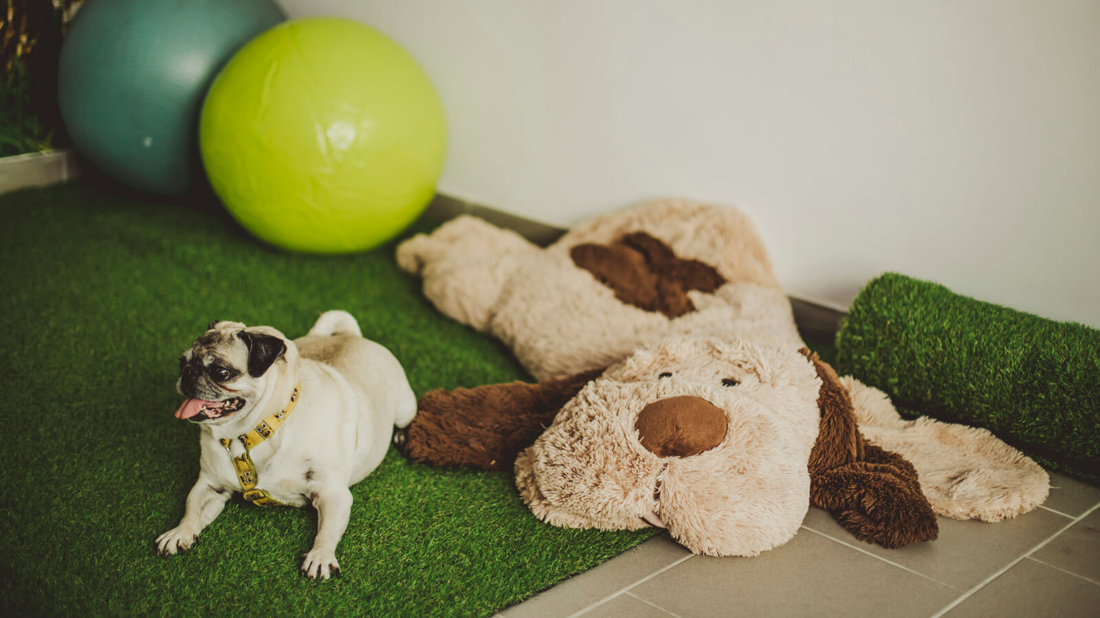 Lots of toys and comfy objects make it easier for dogs to go through a physical rehabilitation session at Agata's Psiruch